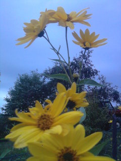 FOTKA - žlutá kvítka,,