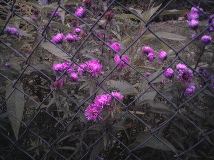 FOTKA - fialková kvítka