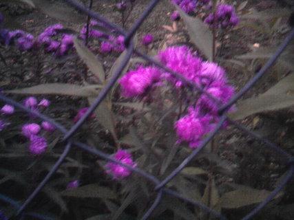FOTKA - fialková kvítka,