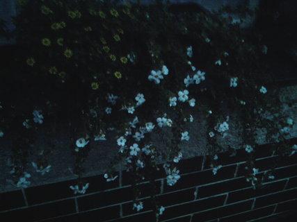FOTKA - svítí ve tmě