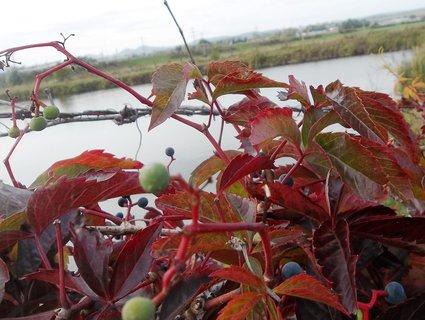 FOTKA - Podzim barví...