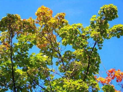 FOTKA - 3.10.2012, barvící se javor v parku na Pankráci v Praze