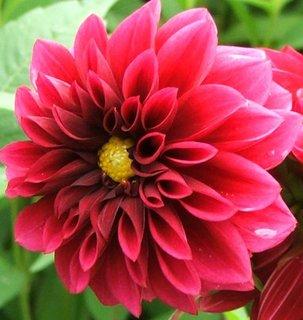 FOTKA - 3.10.2012, všude květy jiřin, Kunratice - zahrádky