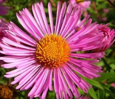 FOTKA - 3.10.2012, květ listopadky..