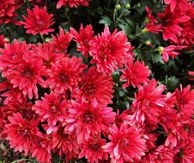 FOTKA - procházka 5.10.12, květy listopadek..,,