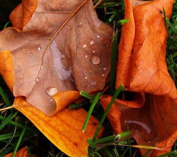 """FOTKA - procházka 5.10.12, kapky nebo spíše """"louže"""" na listí"""