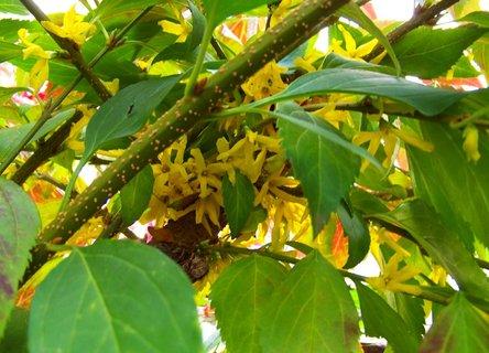 """FOTKA - doslova obsypaný květy """"podzimní"""" zlatý déšť.."""