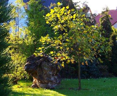 FOTKA - 6.10.2012, ranní sluneční procházka, zahrada...