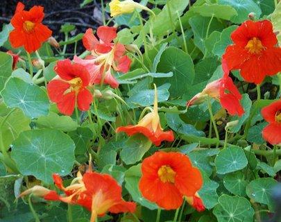 FOTKA - 6.10.2012, ranní sluneční procházka, květy v zahrádkách