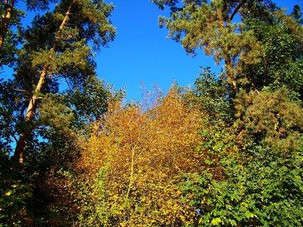 FOTKA - 6.10.2012, ranní procházka, Kunratický les..