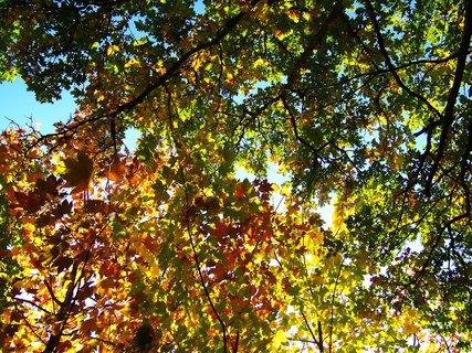 FOTKA - 6.10.2012, sluneční paprsky ve stromech...