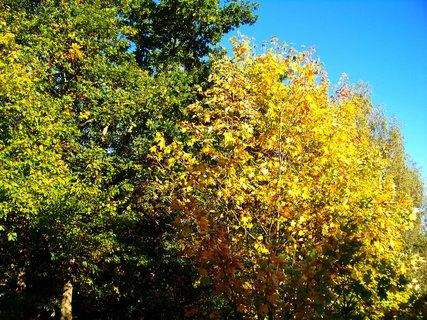 FOTKA - 6.10.2012, ranní procházka, les v Kunraticích..