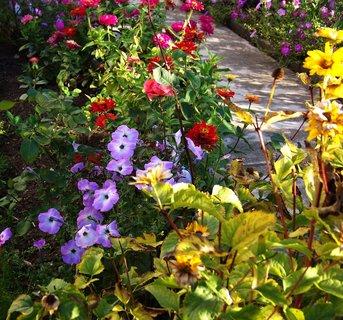 FOTKA - 6.10.2012, květy podél cestičky v zahradě..