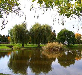 FOTKA - zbarvující se stromy u ryníka Ohrada v Kunraticích