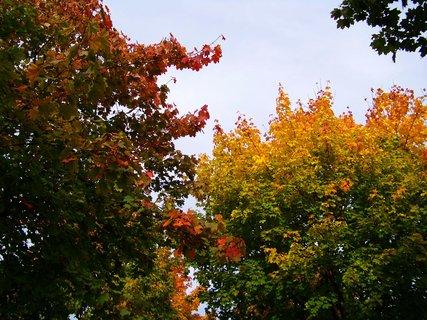 FOTKA - barevné stromy v parčíku..