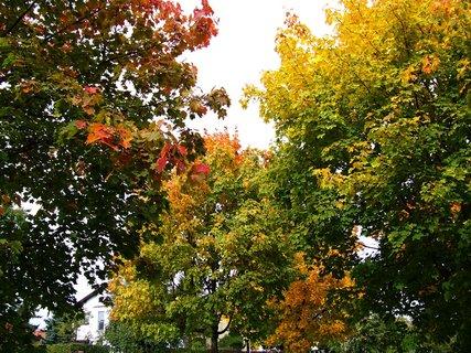 FOTKA - sobotní prosluněná procházka parčíkem, zbarvené javory