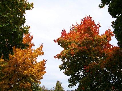 FOTKA - sobotní prosluněná procházka parčíkem, barvy barvičky...