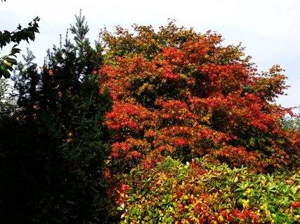 FOTKA - sobotní prosluněná procházka, barevná zahrádka.,,,