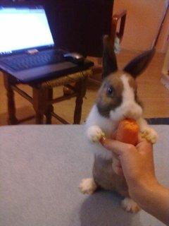 FOTKA - Drž tu mrkev pořádně!