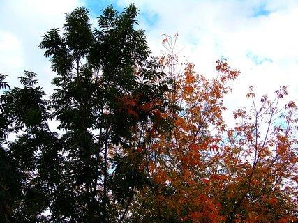 FOTKA - 9.10.2012, barevné stromy v zahradě