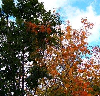 FOTKA - 9.10.12, barevné stromy ve zpustlé zahradě...