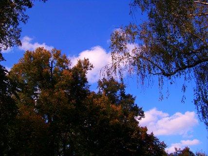 FOTKA - 11.10.2012, podzimní procházka, stromy...