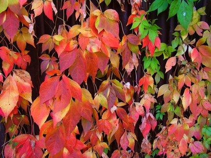 FOTKA - 11.10.2012, podzimní procházka, ozdobený plot...