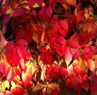 FOTKA - 11.10.2012, podzimní procházka, listy ve slunci...