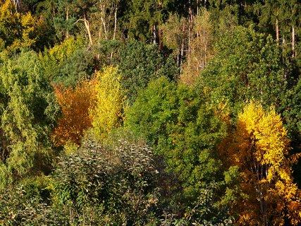 FOTKA - 11.10.2012, procházka, pohled na Krčský les,,..