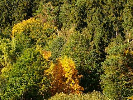 FOTKA - 11.10.2012, procházka, pohled na zbarvující se Krčský les