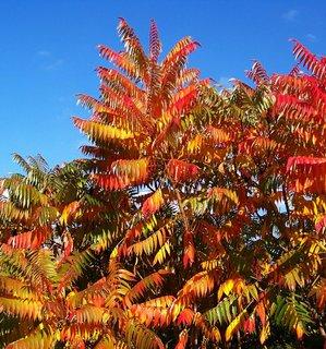 FOTKA - 11.10.2012, podzimní Kunratice, škumpy a modré nebe