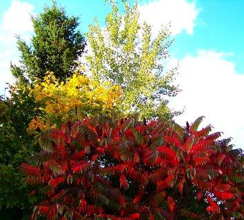 FOTKA - 11.10.2012, podzimní Kunratice, barevné stromy..