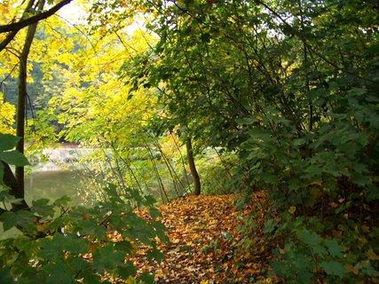 FOTKA - 12.10.12, dopolední procházka, cestička lesem podél rybníka