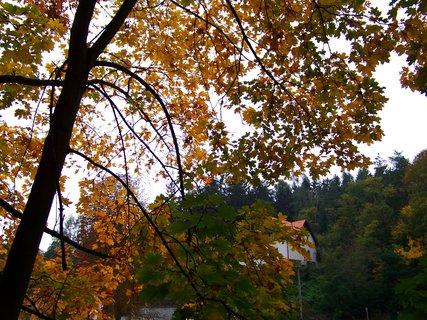 FOTKA - 12.10.12, dopolední procházka, stromy u rybníka se barví..