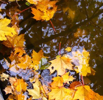 FOTKA - 12.10.12, dopolední procházka, listí ve vodě u splavu