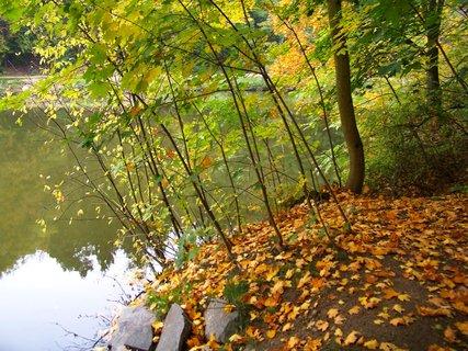 FOTKA - 12.10.12, dopolední procházka, u břehu rybníka..