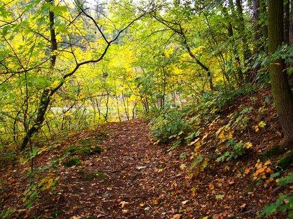 FOTKA - 12.10.12, cestou lesem podél rybníka..