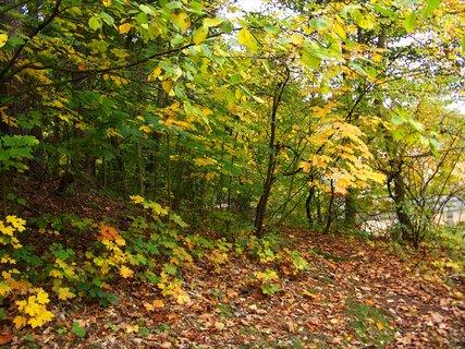 FOTKA - 12.10.12, cestou lesem u rybníka.,,,,
