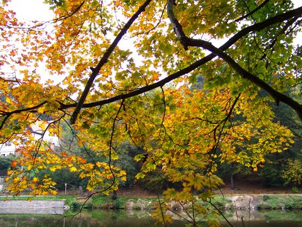 FOTKA - 12.10.12, strom nad rybníkem.,,