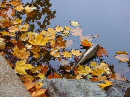 FOTKA - 12.10.12, listy na hladině u splavu .,,,