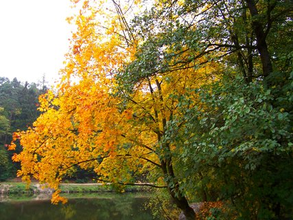 FOTKA - 12.10.12, stromy u rybníku u splavu.,,