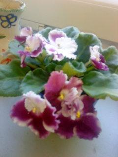 FOTKA - Kvetou mi i další
