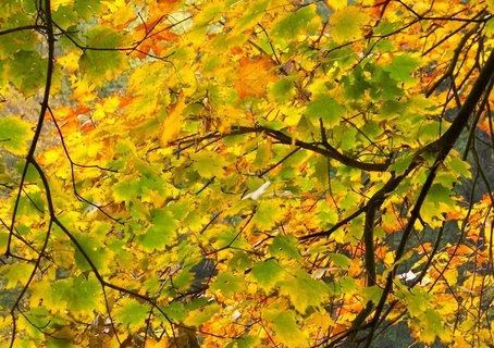 FOTKA - včerejší dopolední procházka k rybníku, stromy