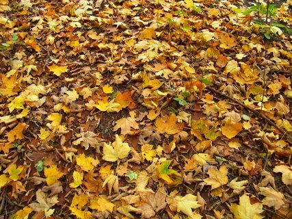 FOTKA - včerejší podzimní procházka, koberec listí v lese..