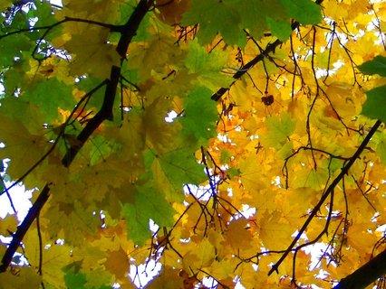 FOTKA - včerejší podzimní procházka, zbarvené listí..