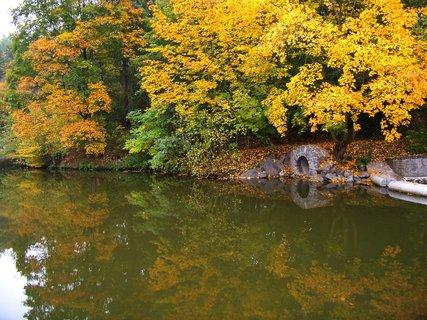 FOTKA - včerejší podzimní procházka, javor u splavu..