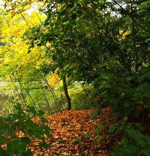 FOTKA - včerejší podzimní procházka, cestička lesem..