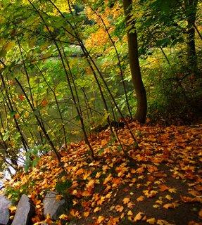 FOTKA - včerejší podzimní procházka, u břehu rybníka..