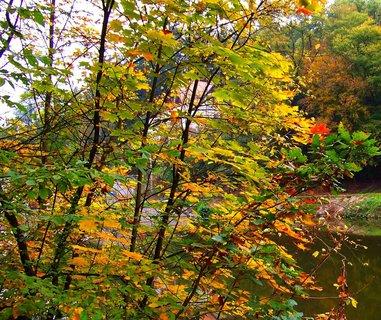 FOTKA - včerejší podzimní procházka, stromy  u rybníku se barví...