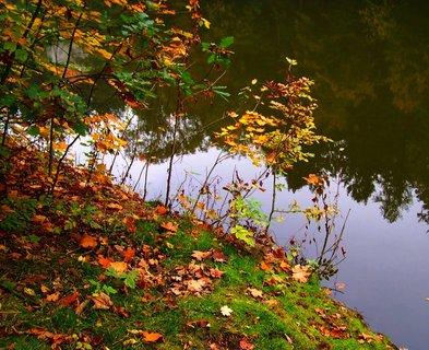 FOTKA - včerejší podzimní procházka, břeh rybníka s odrazy protějších stromů...